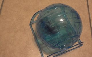 Прогулочный шар для хомяка: выбор, цена, самодельный