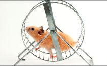 Делаем колесо для хомяка своими руками