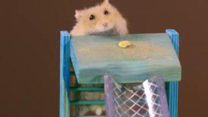 Хомяк хочет семки и лезет по драбине за ними.