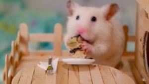 Зверек кушает держа еду в лапках.