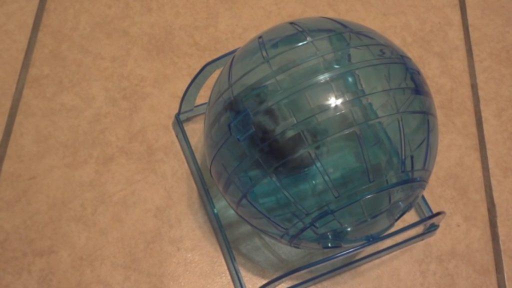 Прогулочный шар с хомяком внутри.