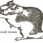 Барабинский, или даурский хомячок (Cricetulus barabensis)
