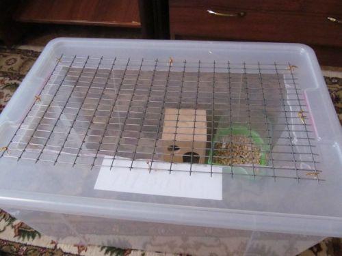 Как своими руками сделать дом для хомяка своими руками