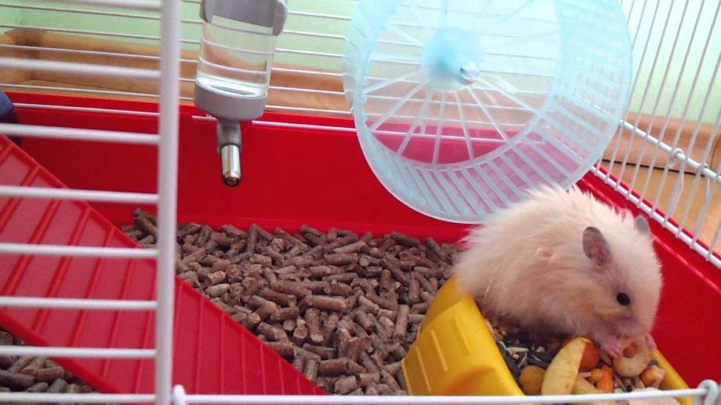 Ангорский хомяк в клетке, пример плохого бегового колеса