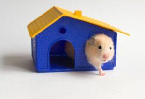 Хомячек в домике