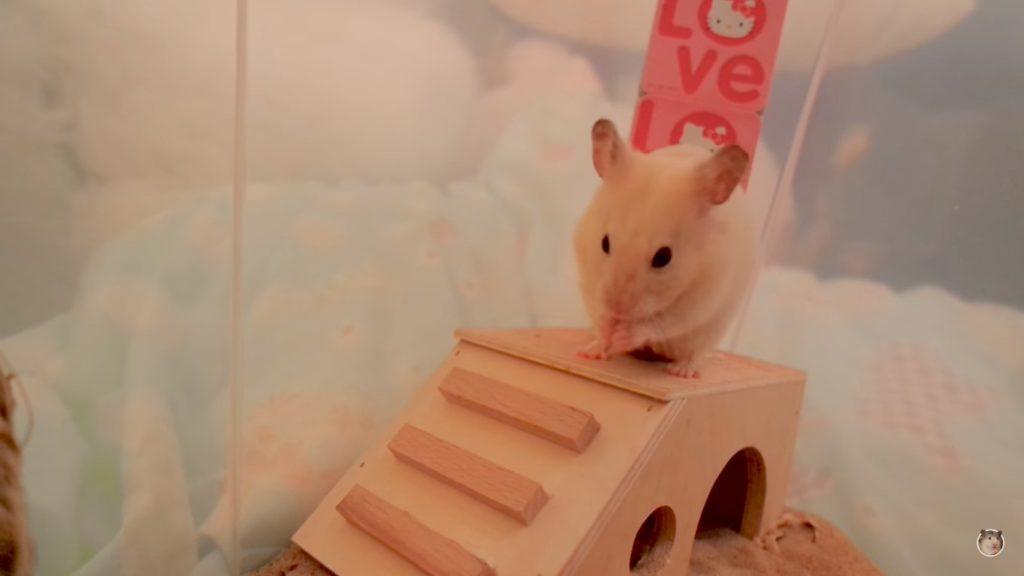 Хомяк на лестнице