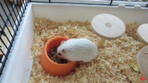 Грызун кушает в клетке.
