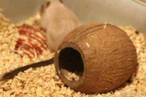 Домик из кокоса возле хомяка