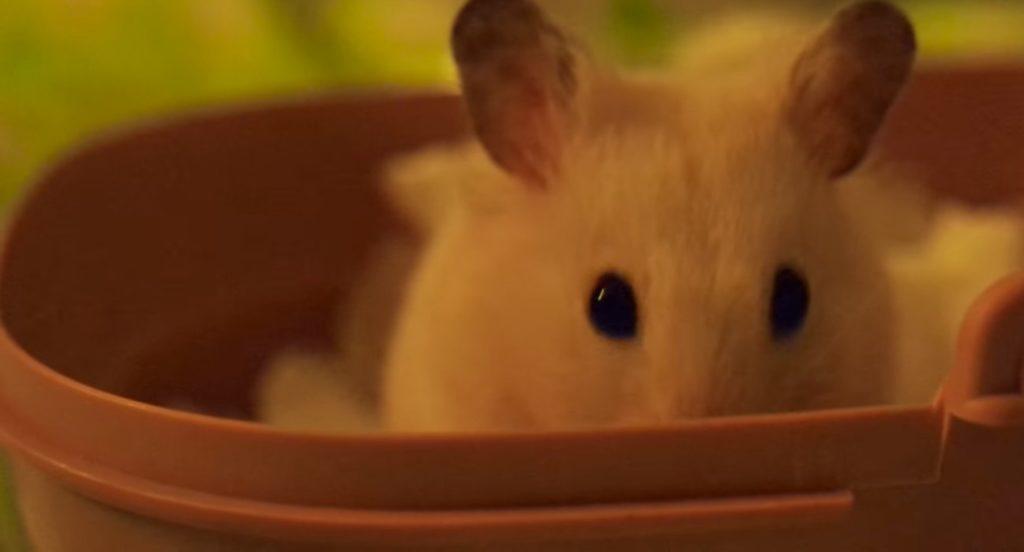 Хомяк спрятал носик в миске и наблюдает за чем-то.